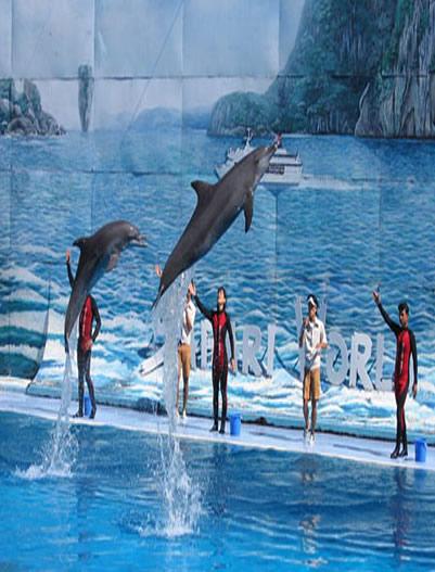 Bangkok- Dolphin-Show
